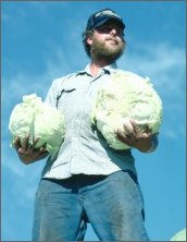 Cabbage Man