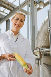 Are There Dangers of Genetically Modified Foods (GMOs)?